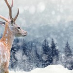 Wir wünschen Ihnen frohe Weihnachten und einen guten Start in's neue Jahr!